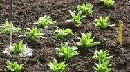 Farming seedling gardening watering in spring Stock Footage