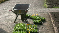 Seedling Metal barrow, push cart in botanic garden Stock Footage