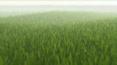 Camera flight over fresh grass field Stock Footage