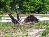 Stock Video Footage of Dead Bird on the Side of the Road. Roadkill Bird of Prey Environmental