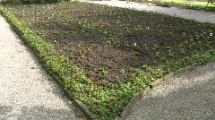 Gardener seedling in garden park - stock footage