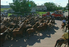 Horses, round up, a vortex of horses Stock Footage