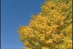 Autumn trees and blue sky, #1 Stock Footage