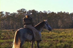 Cowgirl in a Meadow on a Ranch  Stock Footage