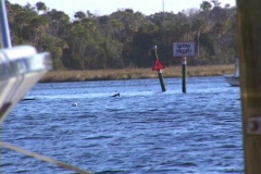Dive Boat Traveling Away in the Distance. River - stock footage