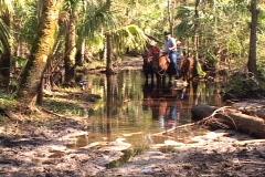Trio On Horseback Lead Horses Through Water Creek Horse Stock Footage