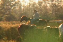 Pan of Cowboy on Horseback Stock Footage