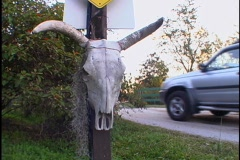 Animal Skull Mounted on Sign Pole Truck Drives By Stock Footage
