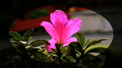 Tropical Flower Stock Footage