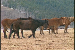 Mules, mountain valley, spring Stock Footage