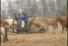 Horse pulling hay wagon, rolling out feed Stock Footage
