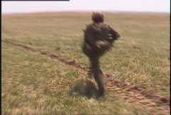 military, running soldier, drops and fires weapon - stock footage