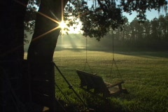 Bench Swing At Dawn Peaceful Serene Woods Nature Silhouette Stock Footage