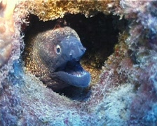 Moray and Prown (D092) Stock Footage