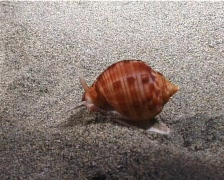 Marine Shell (D012) Stock Footage