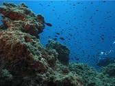 Underwater scene (D196) Stock Footage