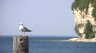 Seagal on pier with cliff in background, seagal flys away Stock Footage