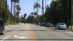 jm642-Hollywood Palms - stock footage
