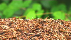 Ants in a hurry - stock footage