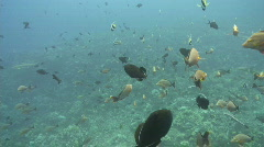 Under water footage - stock footage