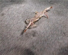 Crab concealment (D080) Stock Footage