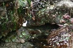 Intertidal creatures  Stock Footage