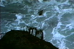 Sea palms in surf CA Stock Footage