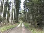 Stock Video Footage of Road in French forest