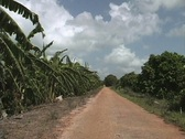 Stock Video Footage of Road with bananas Venezuela