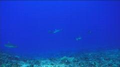Stock Footage - Shark Stock Footage
