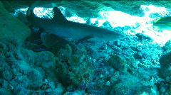 A Shark Underwater Stock Footage