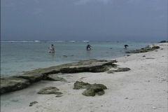 Collecting in lagoon Rarotonga Stock Footage