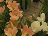 Greenhouse flowers2 Stock Footage