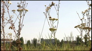 Bee on meadow Stock Footage