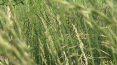 swayinggrass - stock footage