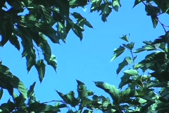 Wildnerness Blue Sky Stock Footage