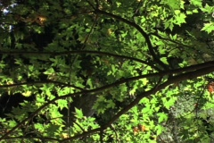 Forest Leaves Stock Footage