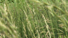 Grass1080  - stock footage
