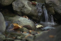 Babbling Brook Stock Footage
