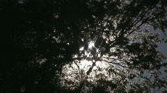 Sun in windy trees. Stock Footage