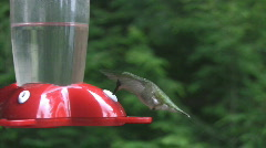 Hummingbird. Stock Footage