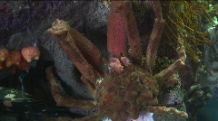 Stock Video Footage of jm739-Lobster