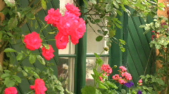 Pink Roses next to a house Stock Footage