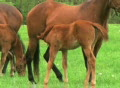Foal Nursing Footage