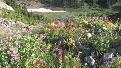 Mountain Wildflowers Stock Footage