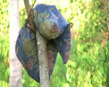 Pillow hang up on the tree Stock Footage