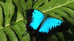 butterflies on fern Stock Footage