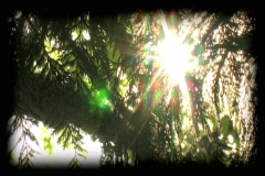 sunburst - stock footage