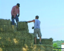 Loading Hay Stock Footage