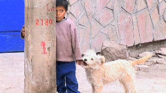 Dog plays with Peruvian boys hand Stock Footage
